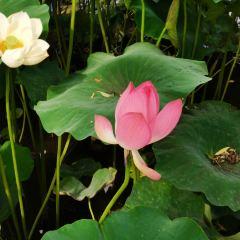 Jinma Bijifang User Photo
