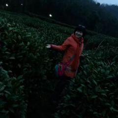 中國茶葉博物館龍井館區用戶圖片