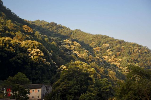 Yannan Feiqiao Stream Scenic Area