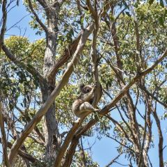 Great Otway National Park User Photo