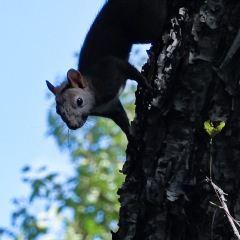 Maoershan National Forest Park User Photo