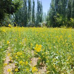芳香植物生態觀光園用戶圖片