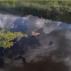 鴨澤湖用戶圖片