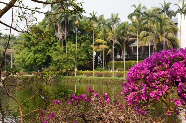 중국과학원 시솽반나 열대 식물원(중과원 써쌍판납 열대식물원)