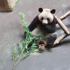 博瓦爾動物園用戶圖片