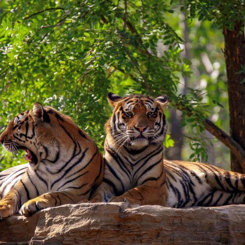 친황다오 야생동물원
