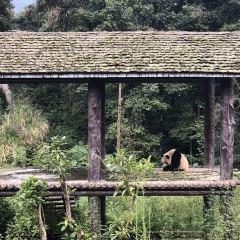 Bifengxia Panda Reserve User Photo