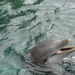 Dolphin Quest 여행 사진