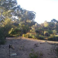 澳大利亞國家植物園用戶圖片