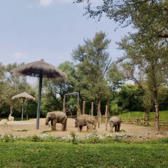 北京野生動物園用戶圖片