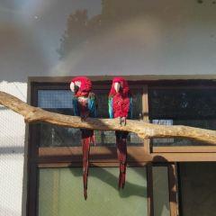 상방산 삼림 동물원 여행 사진