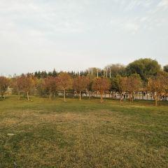 Zhengzhou Forest Park User Photo