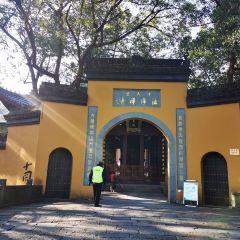 中天竺寺張用戶圖片