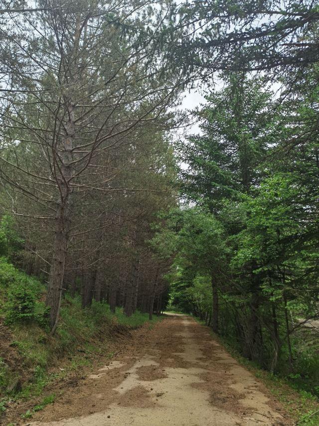 千松壩森林公園