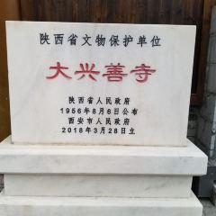 大興善寺用戶圖片