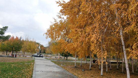 長春公園鬱金香園