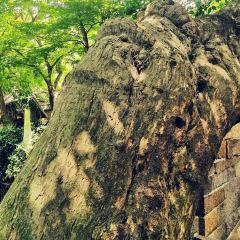라오산 타이칭궁 관광구 여행 사진