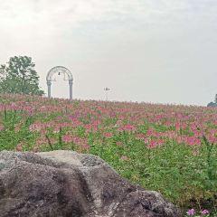 윈란만 꽃밭경관 공원 여행 사진