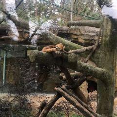 Wenzhou Zoo User Photo