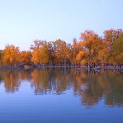 금탑호양림 여행 사진