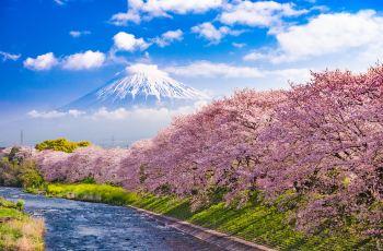 東京で人気の美しい庭園