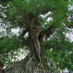 招兵樹用戶圖片