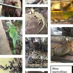 Xiangshi Zoo User Photo