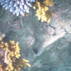 大堡礁用戶圖片