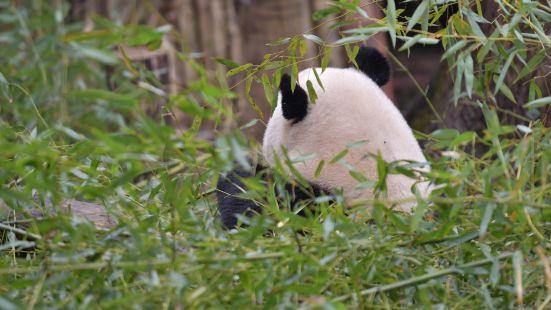海峽熊貓世界