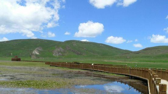 在没有来尕海湖之前,我还真的没有对他有太多的期待,只是去甘南