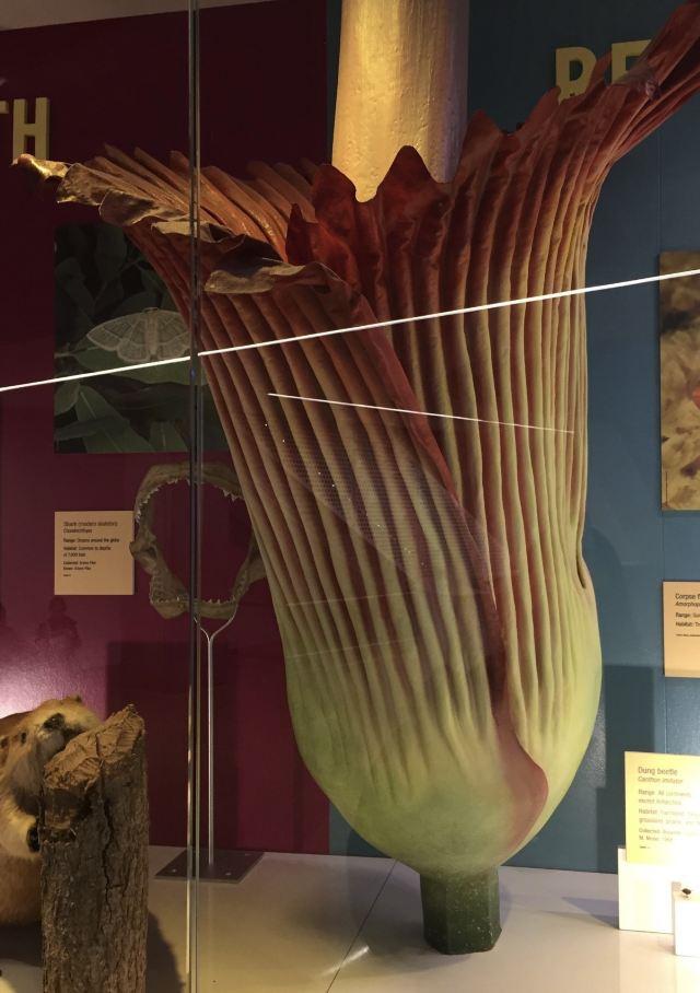 佩洛特自然科學博物館