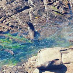 海豹灣用戶圖片