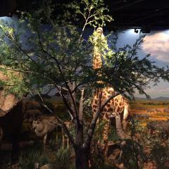 충칭자연박물관(신관) 여행 사진