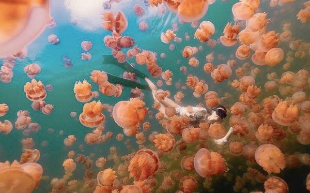 【台帛旅遊泡泡正式啟動】旅遊泡泡最新動態、返台規定一次看(持續更新)