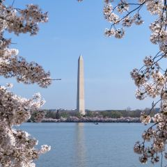 Tidal Basin User Photo