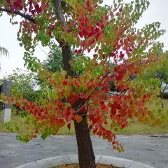 Xihu Culture Park User Photo