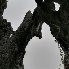 思南石林旅遊區用戶圖片