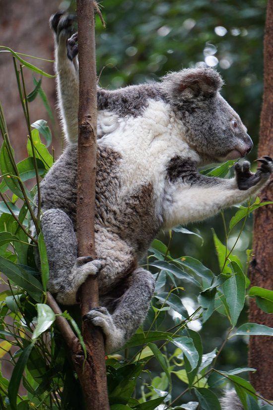 可倫賓野生動物保護區