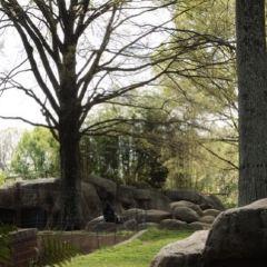 Zoo Atlanta User Photo