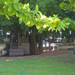 Figtree Playground User Photo