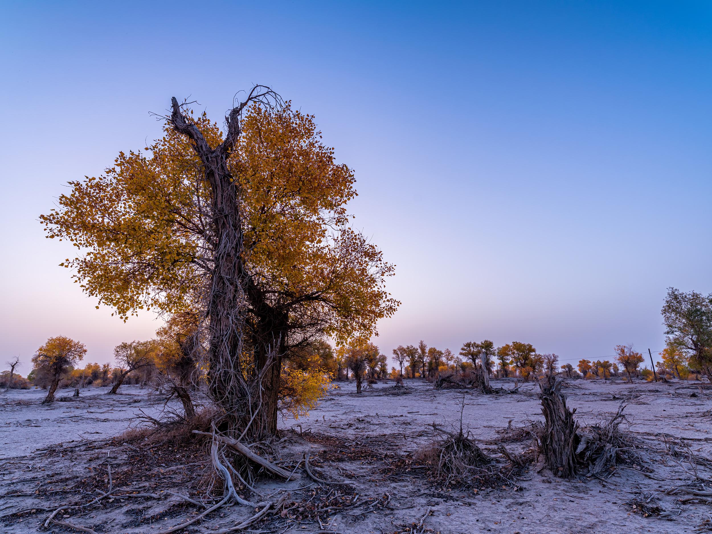 塔克拉瑪幹沙漠(喀什)