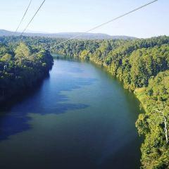 Skyrail熱帶雨林纜車用戶圖片