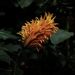 Garden of the Sleeping Giant User Photo