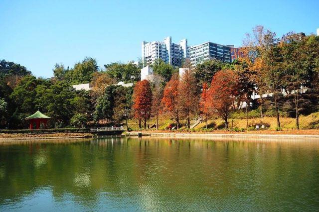 【2020香港紅葉情報】1月8日紅葉指數更新:樹葉疏落,把握6個賞楓好去處