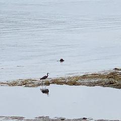 St. Helier's Bay User Photo