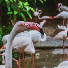 치앙마이 동물원 여행 사진