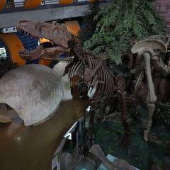 Henan Geological Museum User Photo