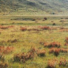 Lhagang Grassland User Photo