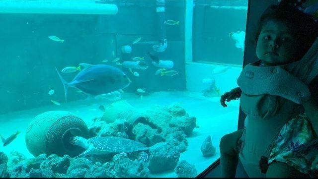 蘇梅水族館和老虎園