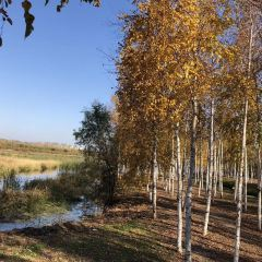 Hegang National Forest Park User Photo